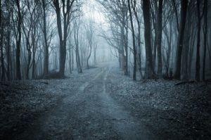 14402736-strada-attraverso-un-bosco-buio-di-notte[1].jpg
